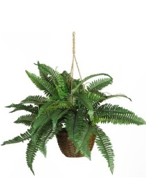 Boston Fern Silk-I